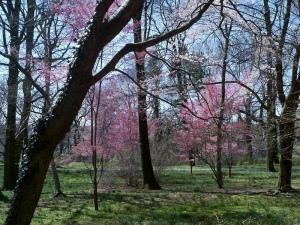 Awbury Spring